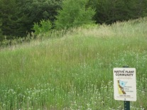 Spring prairie at Prairie Oaks Institute