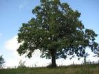 POI tree august 19 2009 027