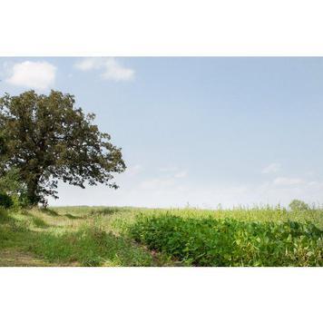 POI Tree Prairie pic